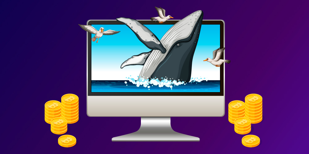 Whales accumulate more Bitcoins